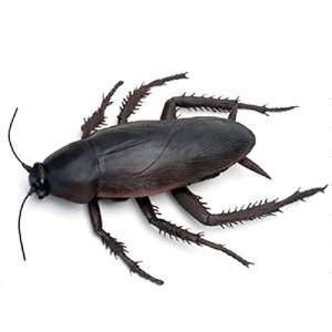 ペヤング ゴキブリ